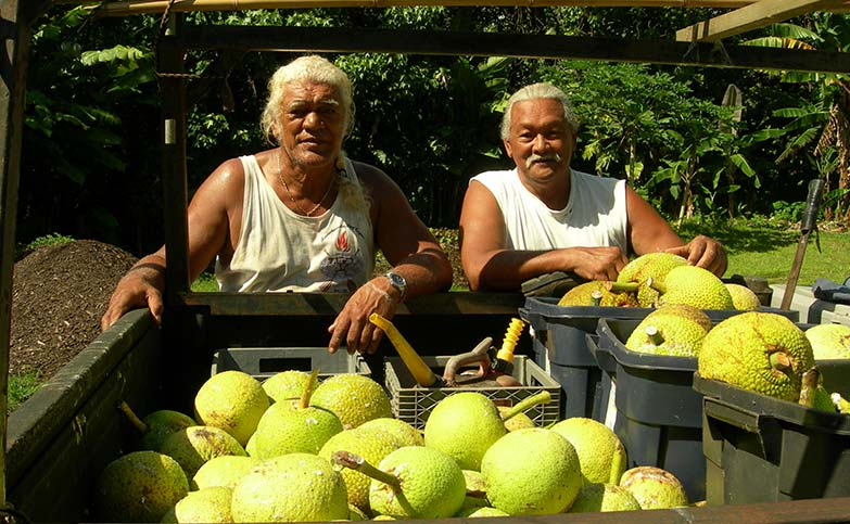 "<p>""For the first time in history, we have a potentially permanent solution to hunger in tropical regions."" Dr. Diane Ragone, Breadfruit Institute Director</p>"